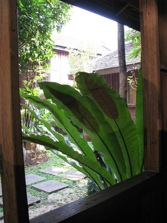 Tanita House: i loved this plant!