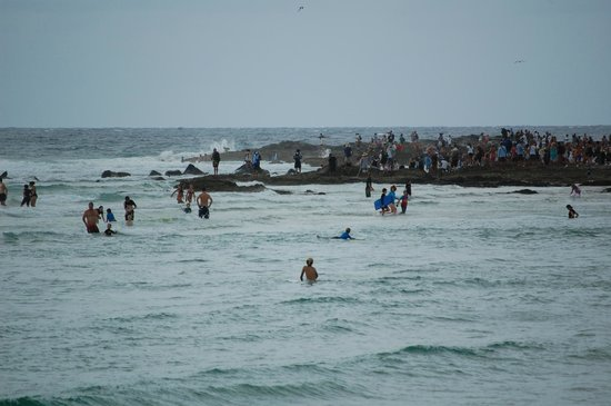 Snapper Rocks: view across from coolongatta