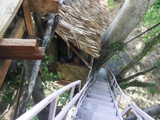 Tanna Lava View Bungalows: stairs leading up to tree house bungalow
