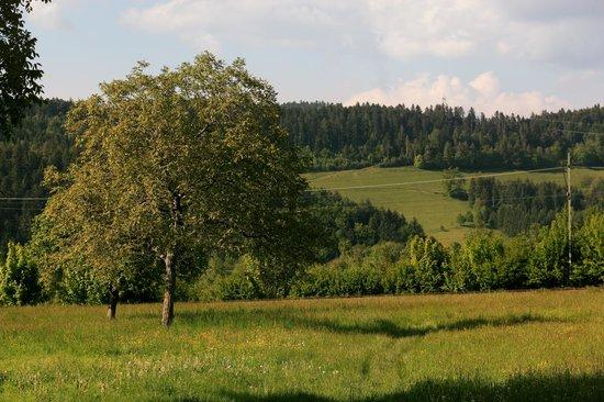 Rainhof Scheune: gegenüberliegende Wiese
