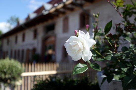 Rainhof Scheune: Rose vor Scheune