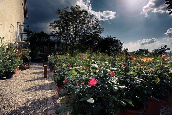 Rainhof Scheune: Garten & Raum