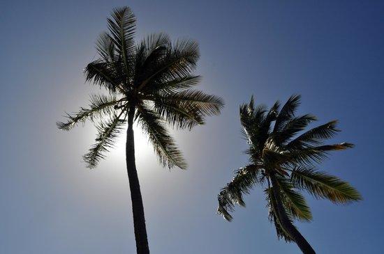 Cockleshell Beach: le palme....