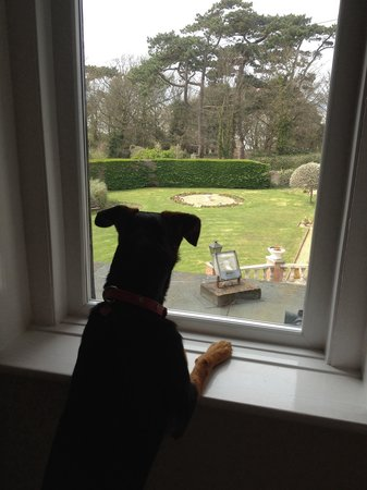 Sentry Mead: Skye enjoying the view