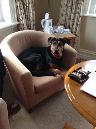 Sentry Mead: Skye making herself comfortable!