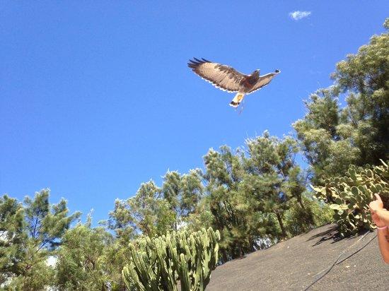Rancho Texas Lanzarote Park : Birds of prey show