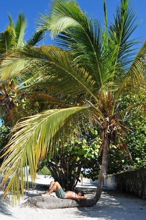 Catalina Island: relax sulla palma
