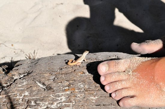 Catalina Island: un piccolo amico