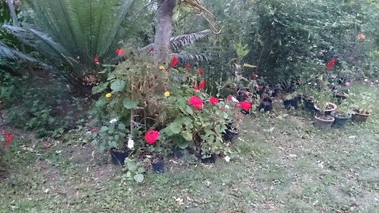 The Sood's Garden Retreat: Small Garden