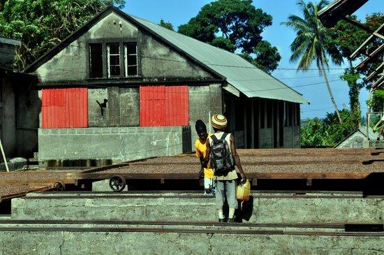Green Island: la fabbrica del cacao
