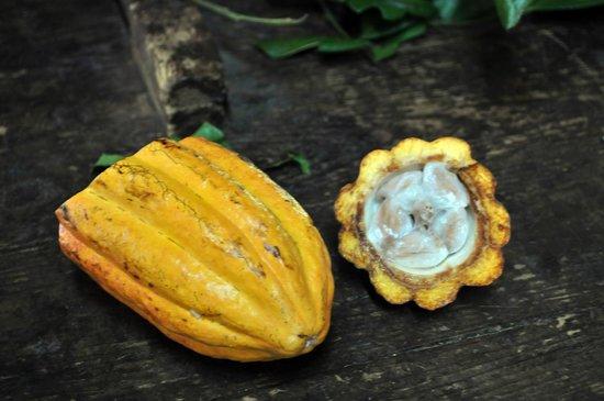 Green Island: il frutto del cacao