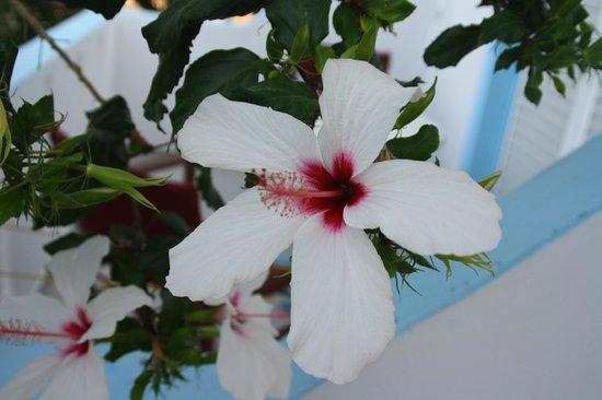 Dionysia Studios: i fiori del giardino