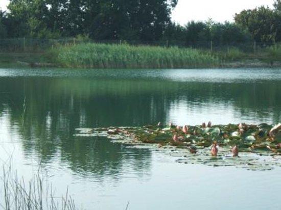 Mill Hill Farm Caravan & Camping Park: The Fishing Lake