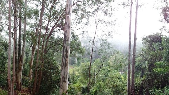 Barrington Wilderness Cottages: View from Balcony