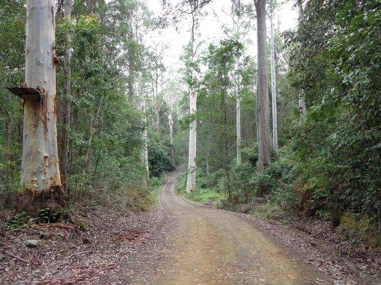 Barrington Wilderness Cottages: Road