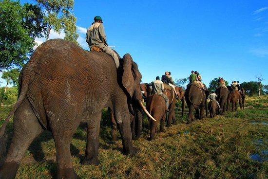 Safari Par Excellence - Elephant Encounter: Walking in a line
