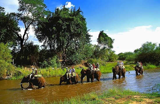 Safari Par Excellence - Elephant Encounter