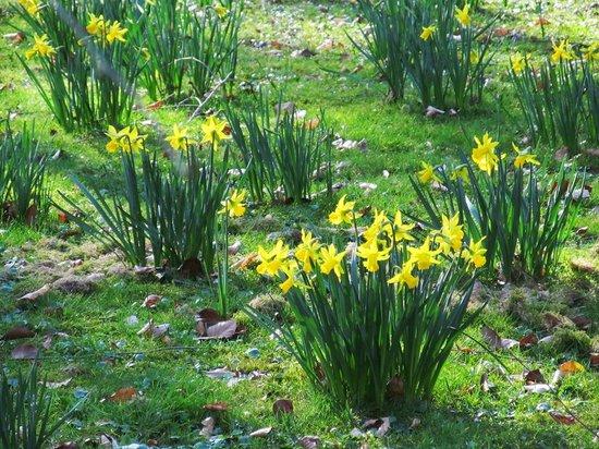 Botanischer Garten: Весна!