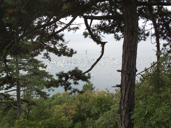 Carso Triestino : dopo il bosco c'è il mare