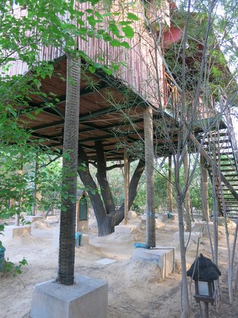The Tree House Resort : Room
