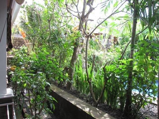 Tropical Bali Hotel : environnement verdoyant autour de la piscine !