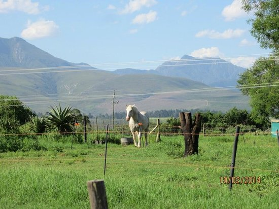 Outeniqua Moon Percheron Stud and Guest Farm: Heavenly place in a heavenly position