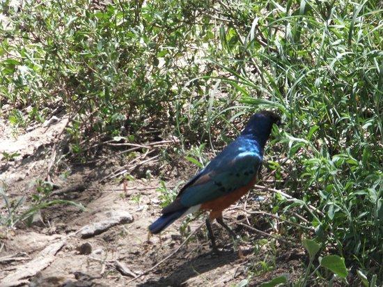 Naabi Hill: ランチのおこぼれをもらいにきれいな鳥も