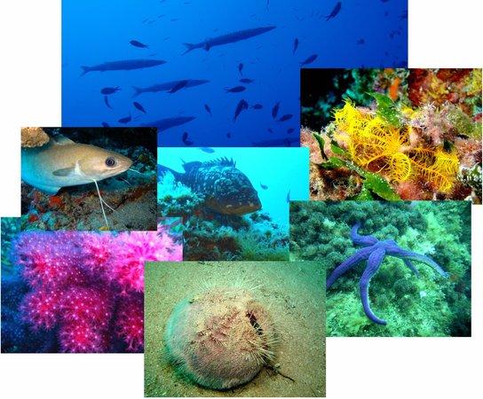 Plongee Passion : La faune de nos sites de plongée