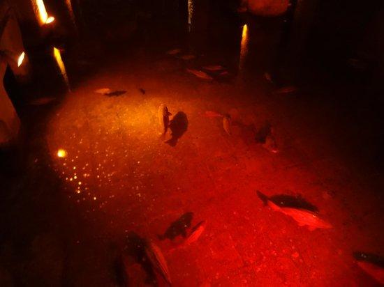Basilica Cistern: 地下で泳ぐ魚たち
