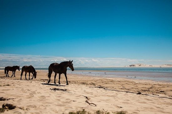 Fisherhaven Traveller's Lodge: horses at the lagoon