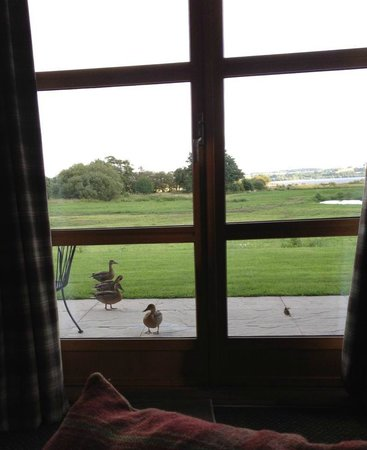 Loch Lomond Waterfront: Some early morning visitors to our lodge