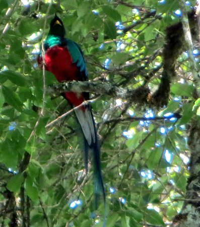 Toucanet Lodge: one of the quetzal pair