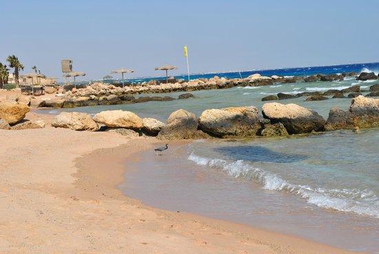 Citadel Azur Resort: Пляж и море