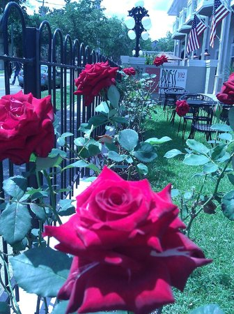 The roses at Hotel Tarrymore