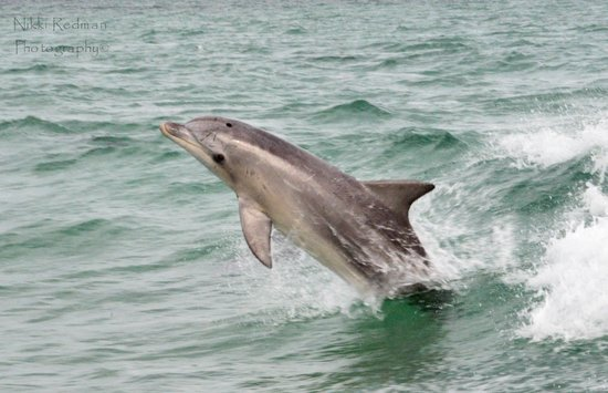 Kangaroo Island Marine Adventures: checking us out
