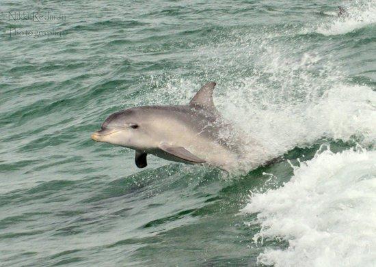 Kangaroo Island Marine Adventures: surfs up
