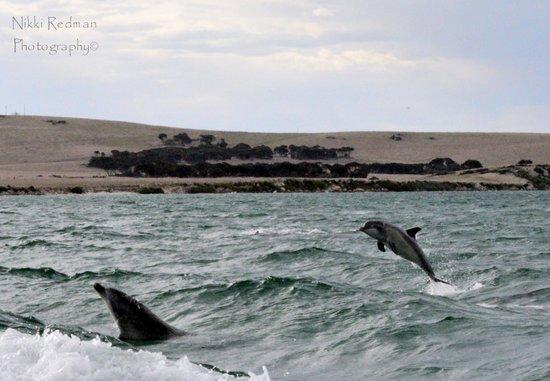 Kangaroo Island Marine Adventures: yahoo