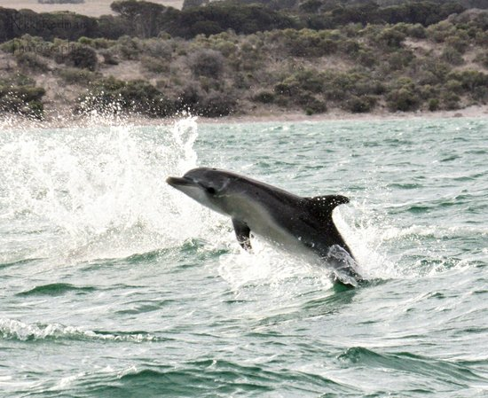 Kangaroo Island Marine Adventures : fun time