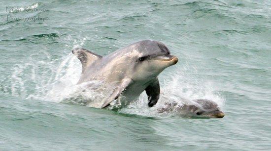 Kangaroo Island Marine Adventures: ;)