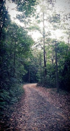Banasura Island Resort : Paths to explore
