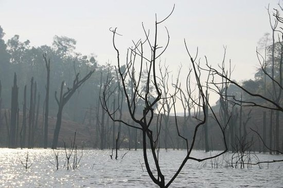Banasura Island Retreat : Dead trees - surreal landscape