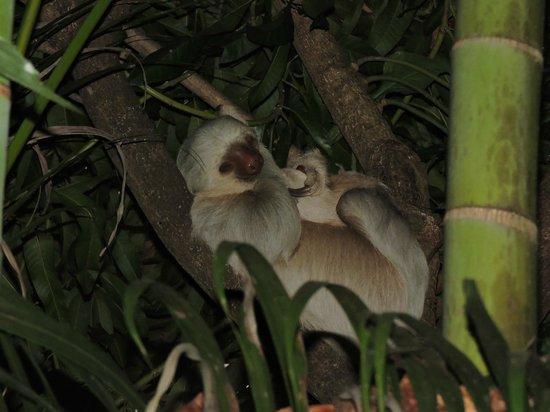 Hotel Costa Verde: sloths!!!!!