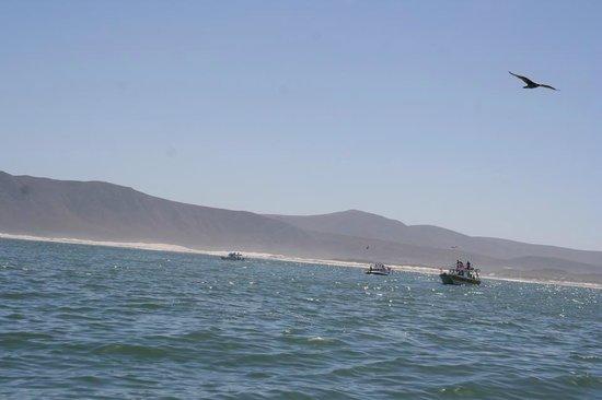 Marine Dynamics: Shark Cage Dive Trip