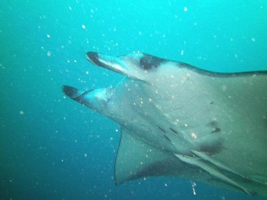 Diving Bluetribe Moofushi: wow