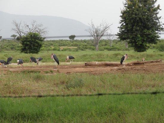 Sentrim Tsavo East: Blick vom Speisesaal