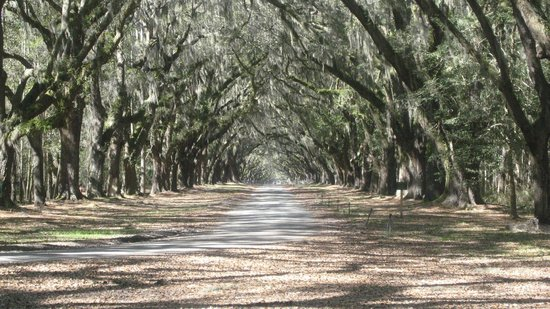 Wormsloe Historic Site: Oak alley