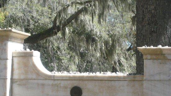 Bonaventure Cemetery : Spanish moss