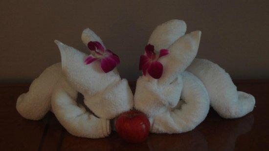The Sukosol: The cute bunny rabbits