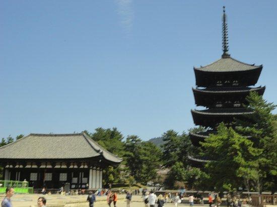 Kofukuji Temple : Beautiful isn't it?
