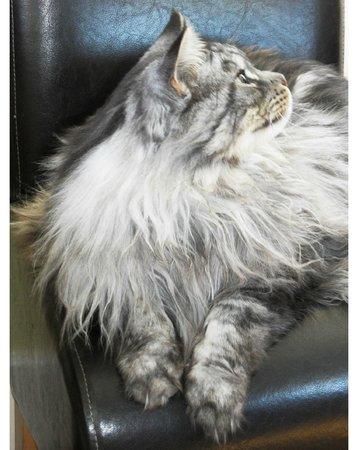 Thornley House: big cat
